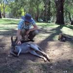 Kangaroo1 - Copy