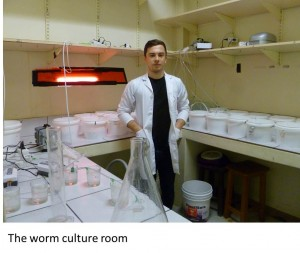 Worm Culture Room