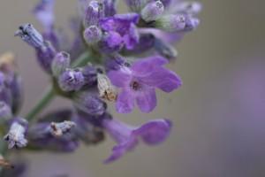arjan-photo-flowers