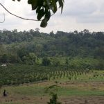 Of trees, climate, palm oil, primates and elephants